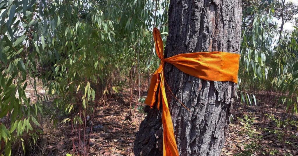 ผ้าสบงและป้ายรณรงค์เชิงสัญลักษณ์ การลุกขึ้นมาจัดการป่าของเยาวชนบ้านหนองสะมอน